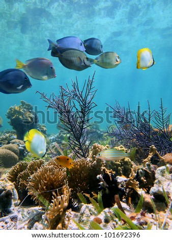 Underwater coral garden with tropical fish and water surface reflection