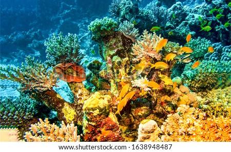 Underwater coral life. Underwater world. Underwater life scene