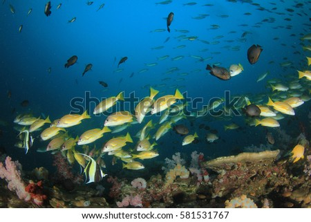 Underwater coral reef and fish #581531767
