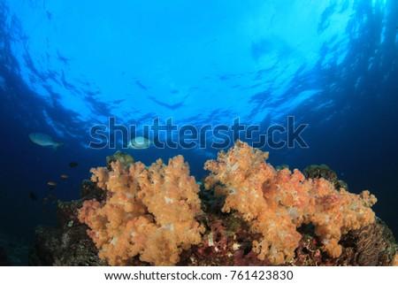 Underwater Coral