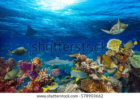 underwater coral reef landscape background  in the deep blue ocean with colorful fish and marine life