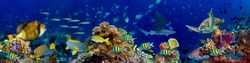 underwater coral reef landscape in the deep blue ocean with colorful fish and marine life wide format panorama background wallpaper