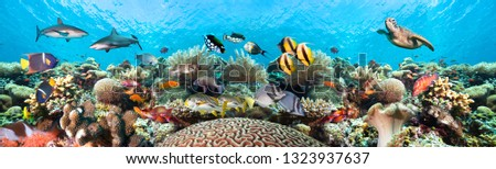 Underwater coral reef landscape super wide banner background in the clear blue ocean with colorful fish and marine life. #1323937637