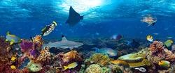 underwater coral reef landscape super wide banner background in the deep blue ocean