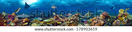 Photo of  underwater coral reef landscape super wide banner background  in the deep blue ocean with colorful fish and marine life