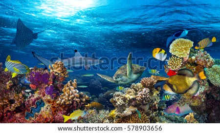 underwater coral reef landscape 16to9 background  in the deep blue ocean with colorful fish and marine life #578903656