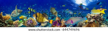 underwater coral reef landscape wide panorama background  in the deep blue ocean with colorful fish and marine life