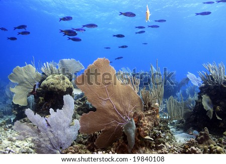 underwater coral photography  underwater photo coral