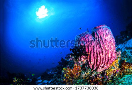 Underwater coral reef sea sponge view