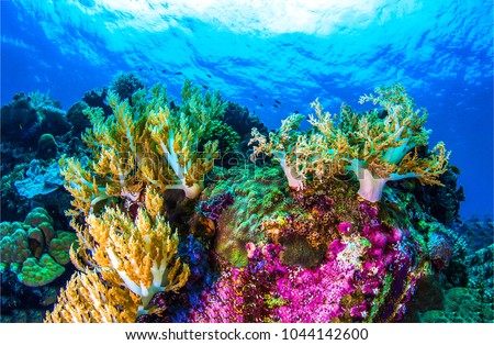 Underwater coral reef sea view landscape