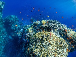 Underwater coral reef with a lot of colorful small fish in Red Sea