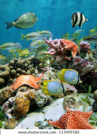Underwater coral reef with starfish and school of colorful fish beneath the water surface