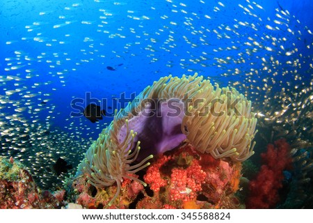 Underwater coral reef with tropical fish in ocean #345588824