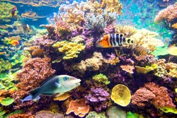 Underwater coral reef with tropical fishes