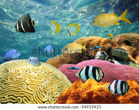 Underwater Coral scene on a reef with colorful fishes and water surface in background - stock photo