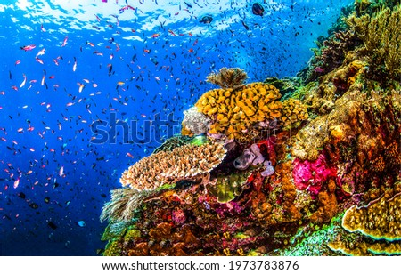 Underwater coral with undersea life. Coral fishes underwater. Underwater coral fishes view. Underwater world scene