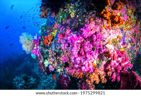 Underwater corals in undersea scene. Beautiful underwater coral view. Macro view of underwater coral. Underwater world scene