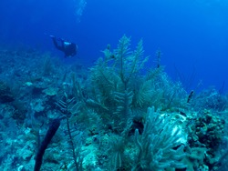 underwater Cuba, scubadivers and collars