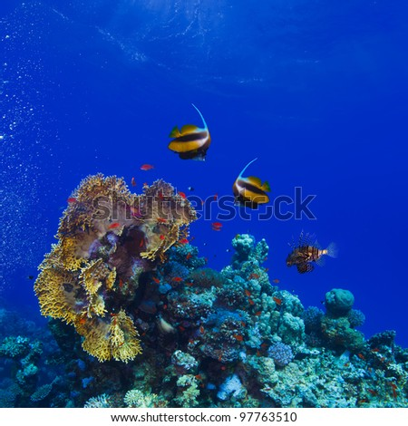 underwater deep blue sea coral garden with banerfish and many different kinds of fish