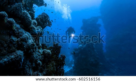 Stock Photo Underwater diver in underwater world landscape