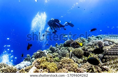 Underwater diving scene view. Diving underwater. Underwater diving scene. Underwater diving