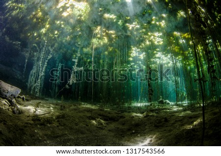 Underwater freshwater. Mysterious freshwater river. Spring water #1317543566
