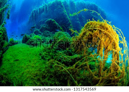 Underwater freshwater. Mysterious freshwater river. Spring water #1317543569