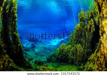 Underwater freshwater. Mysterious freshwater river. Spring water #1317543572