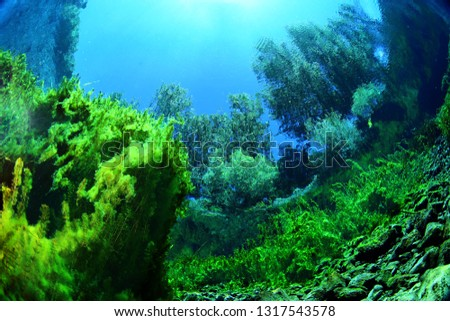 Underwater freshwater. Mysterious freshwater river. Spring water #1317543578
