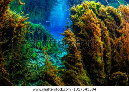 Underwater freshwater. Mysterious freshwater river. Spring water #1317543584