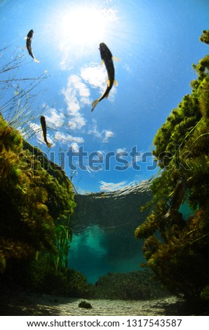 Underwater freshwater. Mysterious freshwater river. Spring water #1317543587