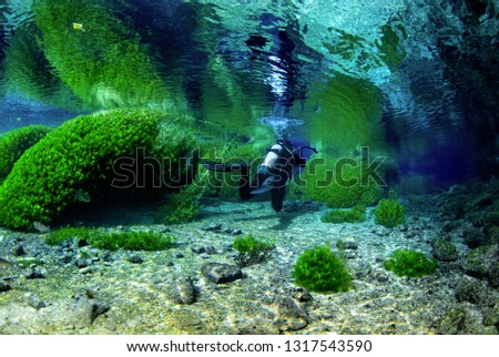 Underwater freshwater. Mysterious freshwater river. Spring water #1317543590