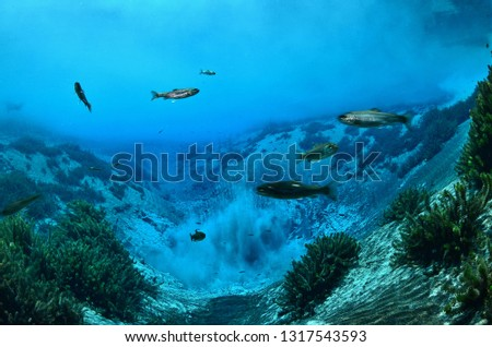 Underwater freshwater. Mysterious freshwater river. Spring water #1317543593
