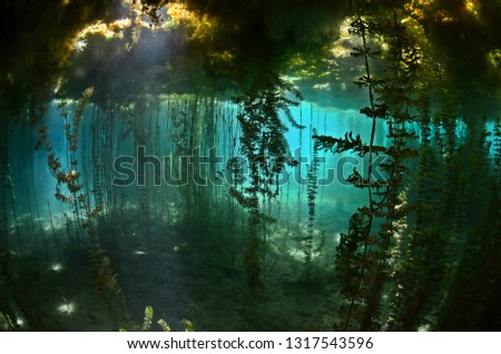 Underwater freshwater. Mysterious freshwater river. Spring water #1317543596