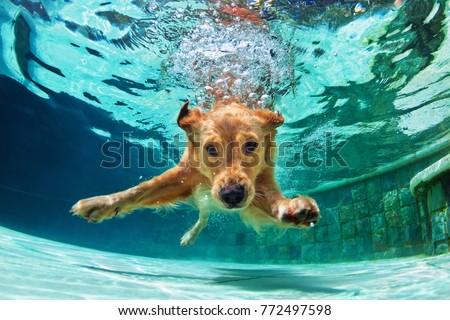 underwater funny photo of...