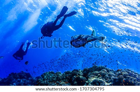 Underwater giant fish and divers. Diving underwater. Underwater dinving scene. Two divers underwater with giant fish