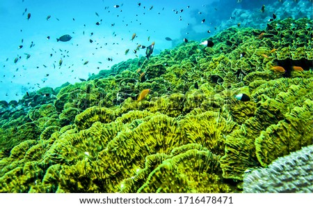 Underwater green coral reef view
