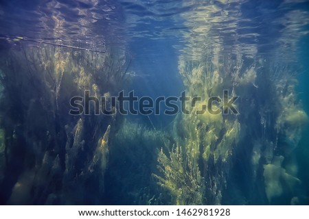 underwater green landscape / nature underwater eco ecology lake, wild diving