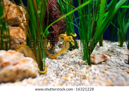 underwater image of a seahorse