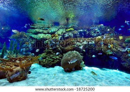 underwater coral photography  Underwater Coral Reef Photography Underwater