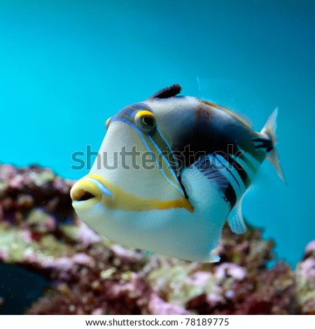 underwater image of tropical fish