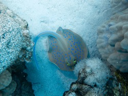 Underwater impressions while freediving and scubadiving