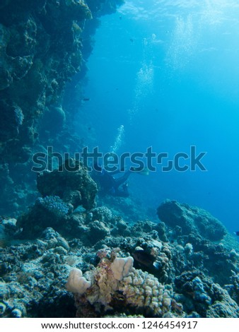 Underwater impressions while freediving and scubadiving #1246454917