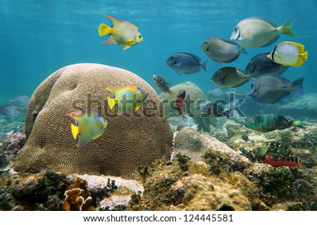 Underwater in a reef of the Caribbean sea with brain coral and a shoal of colorful tropical fish