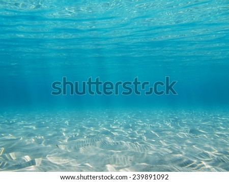 Underwater in the Caribbean sea on a shallow sandy seabed with sunlight through water surface, natural scene