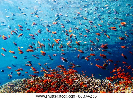 Underwater landscape Bali, Indonesia - stock photo