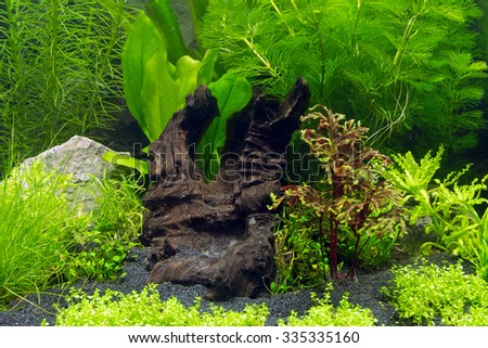 Underwater landscape, closeup of a planted fish tank without fishes