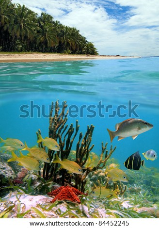 Underwater landscape of a tropical sandy beach with coconut trees and split by waterline, school of fish with a starfish and rope sponge, Caribbean sea, Panama