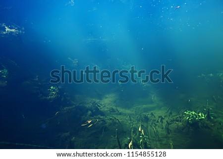 underwater landscape transparent lake / fresh water ecosystem unusual landscape under water #1154855128