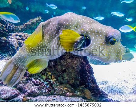 Underwater landscape with coral reef and fish. The aquarium inhabitants of the underwater world in the Aquarium de La Rochelle, France #1435875032